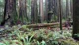 JEDEDIAH SMITH STATE PARK CALIFORNIA - REDWOODS FORESTS VIEWS - ROADTRIP 2010 (4).JPG