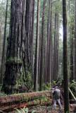 JEDEDIAH SMITH STATE PARK CALIFORNIA - REDWOODS FORESTS VIEWS - ROADTRIP 2010 (9).JPG