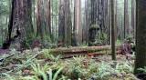 JEDEDIAH SMITH STATE PARK CALIFORNIA - REDWOODS FORESTS VIEWS - ROADTRIP 2010.JPG