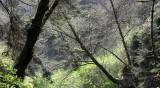 PRAIRIE CREEK STATE PARK FERN CANYON - VIEWS ABOVE THE CANYON (2).JPG