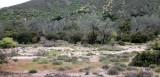 PINNACLES NATIONAL MONUMENT CALIFORNIA - RIPARIAN COMMUNITY.JPG