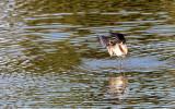 BIRD - WHIMBREL - SAN JOAQUIN WILDLIFE REFUGE IRVINE CALIFORNIA (12).JPG