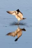 BIRD - WHIMBREL - SAN JOAQUIN WILDLIFE REFUGE IRVINE CALIFORNIA (21).JPG