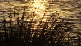 SAN JOAQUIN WILDLIFE RESERVE IRVINE CALIFORNIA - ROADTRIP 2010 (5).JPG