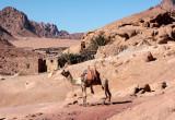 Taxi, Mt Sinai