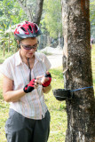 Rubber collecting
