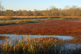 Autumn Wetlands_3773.jpg
