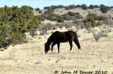 Wild Horses Placitas, NM