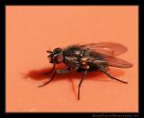 fly_1804.jpg