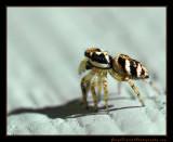 spider_1793.jpg