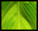 leaf_1196.jpg