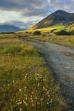 The Track - Mt Cotton