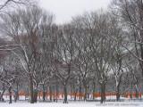 THE GATES, CENTRAL PARK 2005