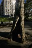 Tree, Riverside Park