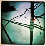 Bound Tree