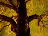 Tree #812