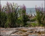 3791 Fossil Beach at Rock Point.jpg