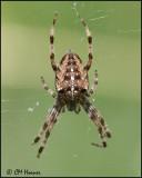 4301 Spider id.jpg