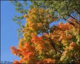 4410 October Sky.jpg
