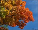 4421 October colours.jpg