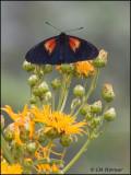 8713 Butterfly id