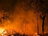 Bushfire, Pallarenda R0011855