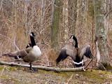 Mating Season!