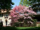 Cherokee Park Home.