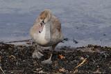 1) The ugly duckling / Den grimme ælling