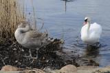 2) The ugly duckling / Den grimme ælling