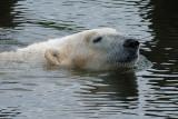 1) Polar bear bath / Isbjørnebad