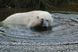 2) Polar bear bath / Isbjørnebad