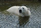 3) Polar bear bath / Isbjørnebad