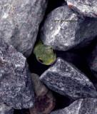 Green Snake Peeking