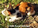 Krisna's Kitty: Belang