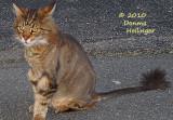 Lion cut haircut - Augie
