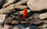 Spring Birds 2010