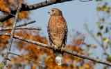 Unusual Yard Birds - The Week of November 9, 2007