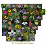 Arkansas Native Wildflowers (2nd Ed.)