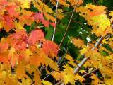 Fall Colours.....