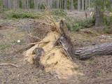 Vid ett vindfälle strax utanför reservatet syns den sandiga jorden