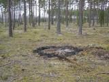 För att låta nya mosippor utvecklas har några fläckar bränts av