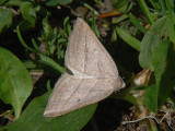 Årets fjärilar - Butterflies and moths 2008