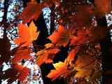 Autumn Views of North Carolina [Gallery]