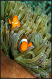 2 Nemos
