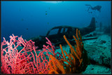 Plane wreck with coral