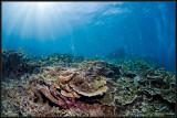 Breathing reef