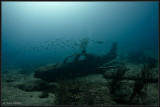 Plane wreck with fish
