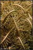 Yellow Crinoid Abstract