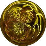 Crinoid Circle